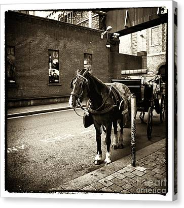 Vintage Guinness Buggy Canvas Print
