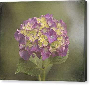 Vintage Hydrangea Canvas Print by Angie Vogel