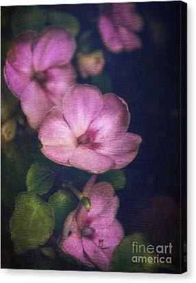 Vintage Impatiens Canvas Print
