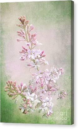 Vintage Lilac Canvas Print by Kathi Mirto
