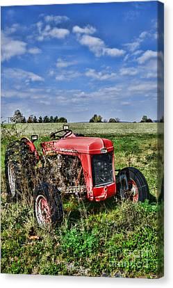Antique Tractors Canvas Print - Vintage Massey-ferguson Tractor by Paul Ward