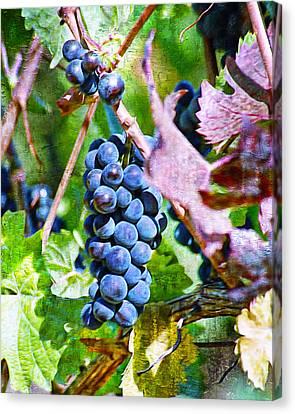 Vintage On The Vine I Canvas Print by Ken Evans