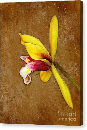 Vintage Orchid Canvas Print by Judi Bagwell