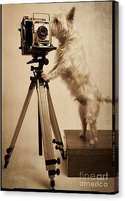 Vintage Pho Dog Grapher Westie Canvas Print by Edward Fielding