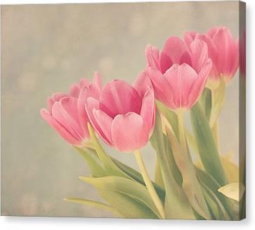 Vintage Pink Tulips Canvas Print by Kim Hojnacki