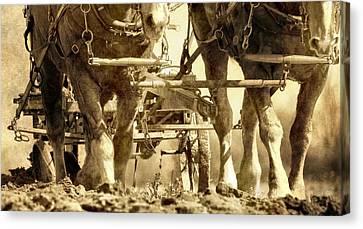 Plow Horse Canvas Print - Vintage Plough by Dan Sproul