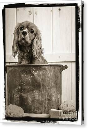 Spaniel Puppy Canvas Print - Vintage Puppy Bath by Edward Fielding