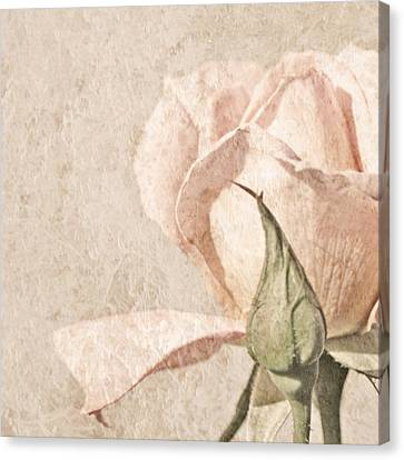 Vintage Rose Canvas Print by Brooke T Ryan