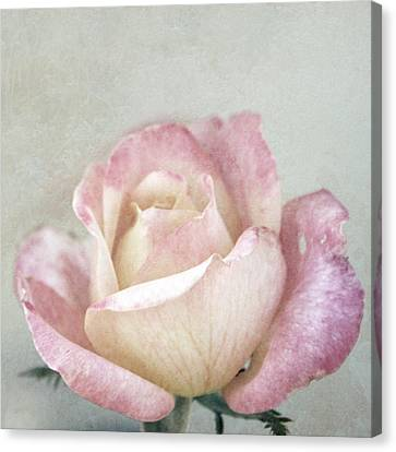 Vintage Rose In Pink And Robin's Egg Blue Canvas Print by Brooke T Ryan