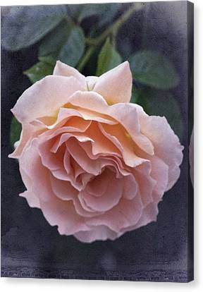 Vintage Rose No. 5 Canvas Print by Richard Cummings
