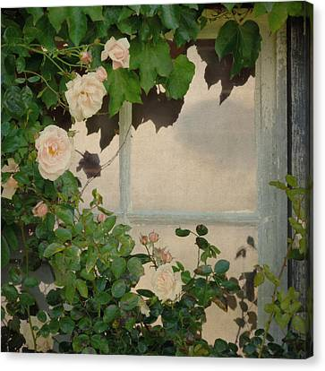 Canvas Print featuring the photograph Vintage Rose by Sally Banfill