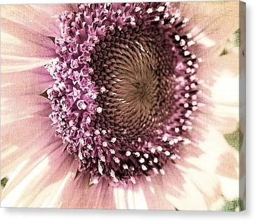 Vintage Sunflower  Canvas Print by Marianna Mills