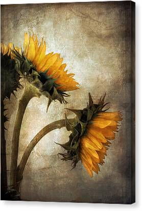 Canvas Print featuring the photograph Vintage Sunflowers by John Rivera