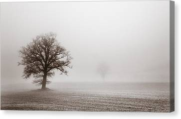 Vintage Treescape Canvas Print by Chris Fletcher