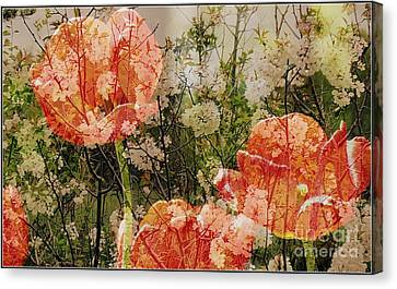 Vintage Tulips Canvas Print by France Laliberte
