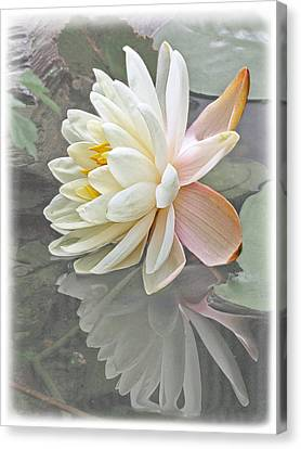Vintage Water Lily Reflections Canvas Print