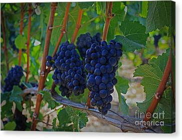 Vintage Wine Canvas Print by Steven Baier
