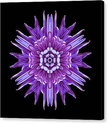 Violet Chrysanthemum Iv Flower Mandala Canvas Print by David J Bookbinder