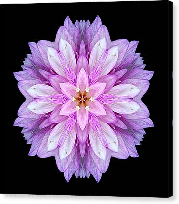 Violet Dahlia I Flower Mandala Canvas Print by David J Bookbinder