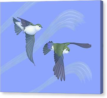 Violet-green Swallows Canvas Print by Nathan Marcy