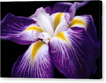 Canvas Print featuring the digital art Violet Iris by Bruce Rolff