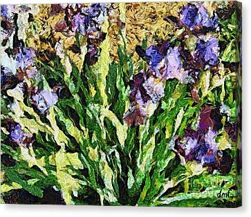 Violet Irises Canvas Print