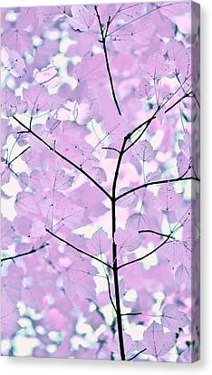Violet Lavender Leaves Melody Canvas Print by Jennie Marie Schell