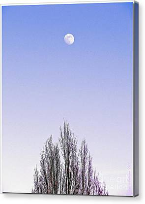 Canvas Print featuring the photograph Violet Moon And Treetop by Chris Anderson