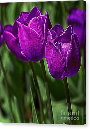 Violet Tulips 2 Canvas Print by Susan Crossman Buscho
