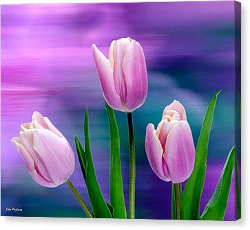 Violet Tulips Canvas Print by John Pagliuca