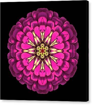 Violet Zinnia Elegans Flower Mandala Canvas Print by David J Bookbinder