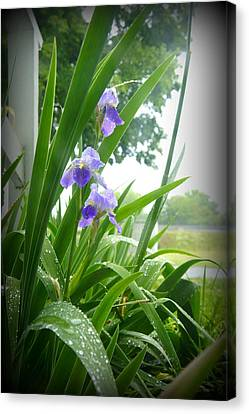 Canvas Print featuring the photograph Iris With Dew by Laurie Perry
