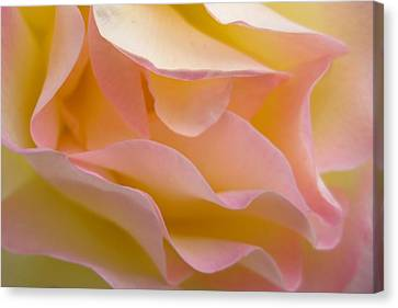 Virgin Folds Canvas Print by Shirley Sirois