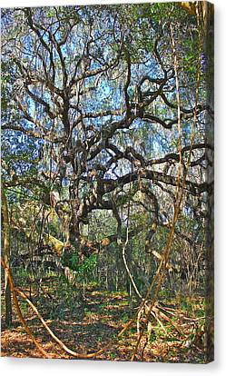 Canvas Print featuring the photograph Virgin Forest by Lorna Maza