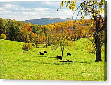 Canvas Print featuring the photograph Virginia Autumn by Olivia Hardwicke