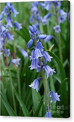 Canvas Print featuring the photograph Virginia Blue Bells  by Eva Kaufman