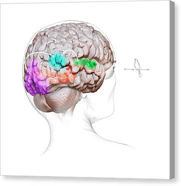 Vision And Sound Neurology Canvas Print