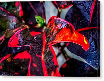 Visions Of Red Canvas Print