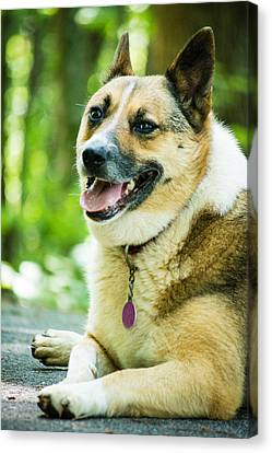 Visiting Dog Canvas Print