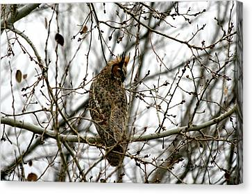Visiting Owl 2 Canvas Print by Rebecca Adams
