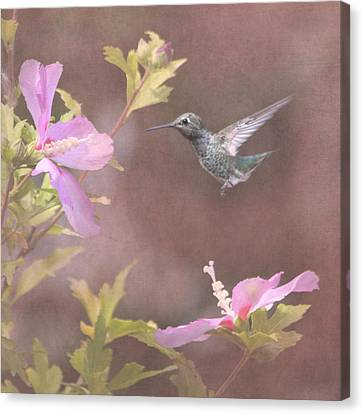 Visitor In The Rose Of Sharon Canvas Print by Angie Vogel
