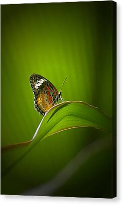 Canvas Print featuring the photograph Visitor by Randy Pollard