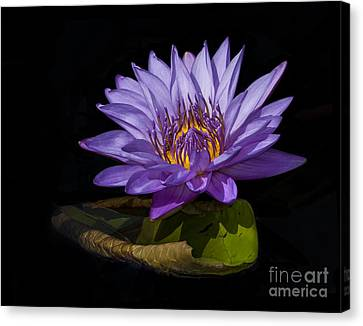 Visitor To The Water Lily Canvas Print
