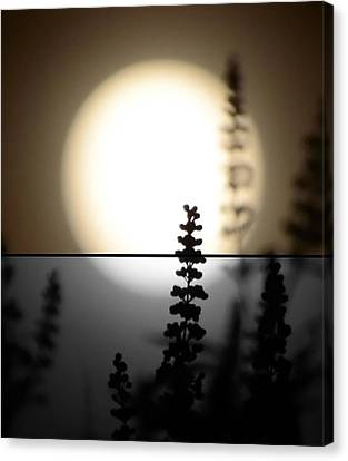 Vitex Moon Canvas Print