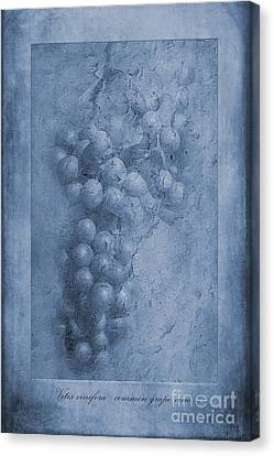 Grape Vines Canvas Print - Vitis Cyanotype by John Edwards