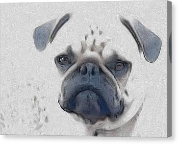 Vito Canvas Print by Cindy Luelling