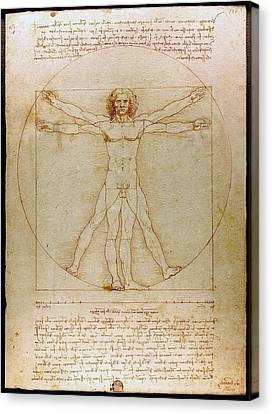 Vitruvian Man By Leonardo Da Vinci  Canvas Print by Karon Melillo DeVega