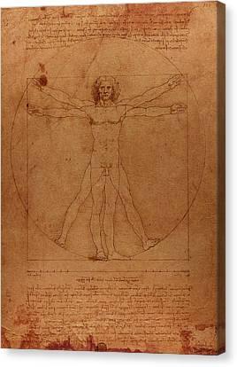 Sketch Canvas Print - Vitruvian Man By Leonardo Da Vinci Sketch On Worn Parchment by Design Turnpike
