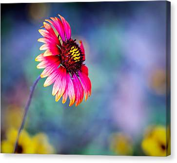 Vivid Colors Canvas Print by Tammy Smith