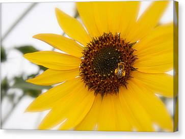 Canvas Print featuring the photograph Vivid Sunflower With Bee Fine Art Nature Photography  by Jerry Cowart